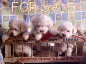 PUPPIES 4 SALE
